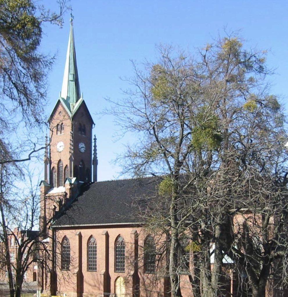 Misteltein på trærne rundt Horten kirke.